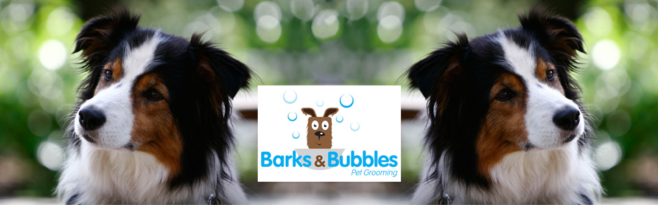 BubblesBarks PretoriaNewEast DogGrooming