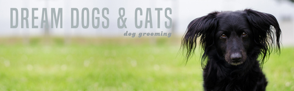 DreamDogsCats PretoriaOldEastMoot DogGrooming